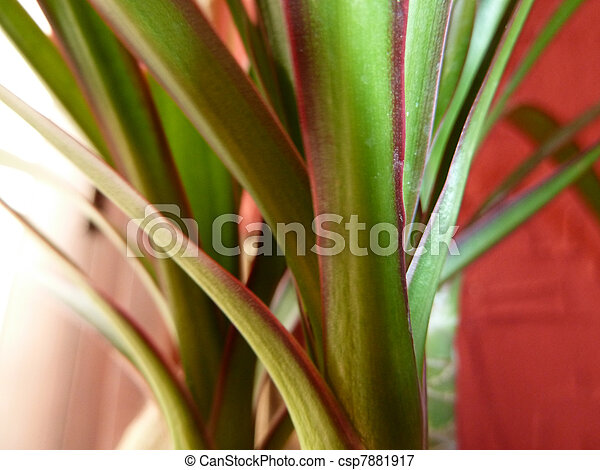 Green Houseplant Red Verigated Green Leaf House Plant