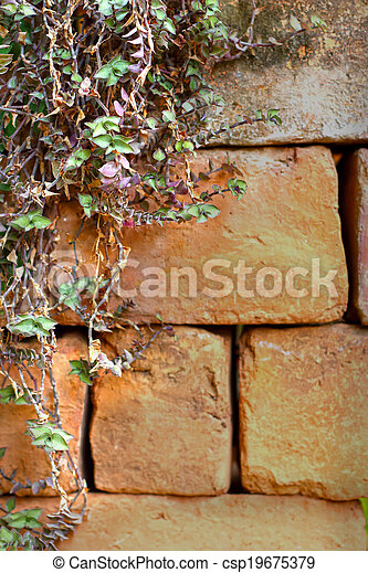 Green ivy leaves on wall - csp19675379