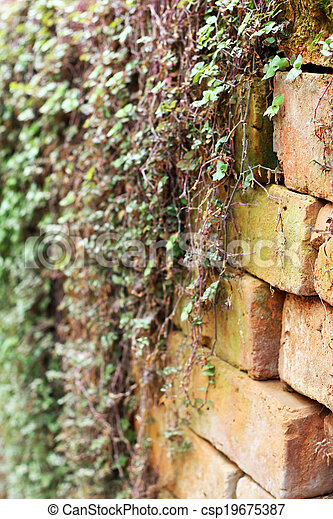 Green ivy leaves on wall - csp19675387