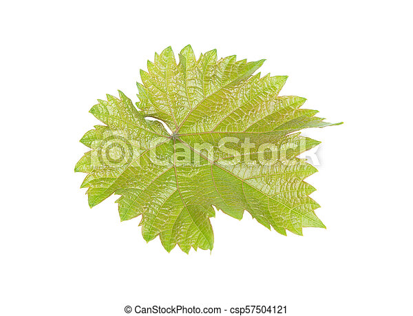 green juicy grape leaf isolated on white background - csp57504121