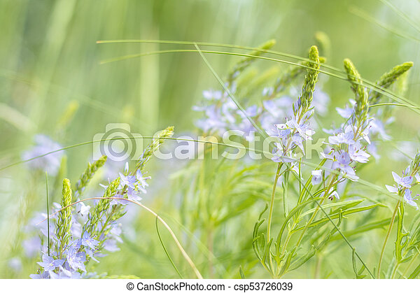Green juicy grass and gentle blue flowers in the field on a sunny day. Shallow depth of field - csp53726039
