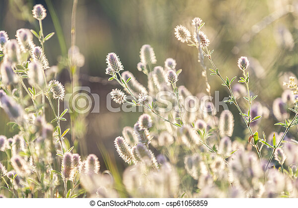 Green juicy grass and gentle flowers in the field on a sunset - csp61056859