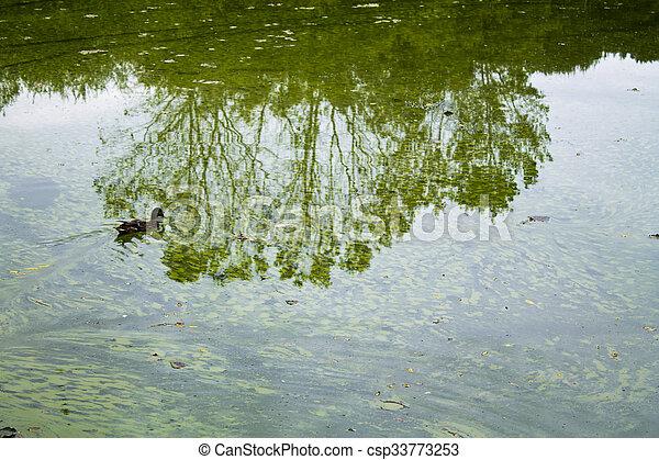 green Lake - csp33773253