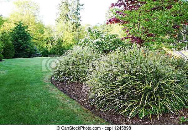 Green Landscape In The Backyard With Large Grass Bushes Green