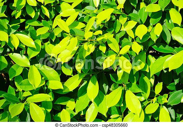 Green Leaf Background Texture - csp48305660