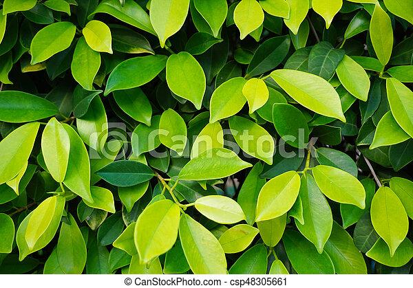 Green Leaf Background Texture - csp48305661