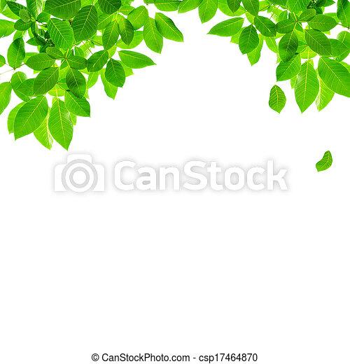 green leaf border design csp17464870