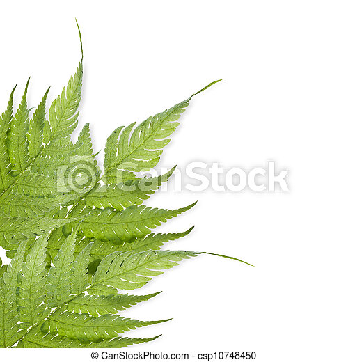 Green leaf isolated on a white background - csp10748450