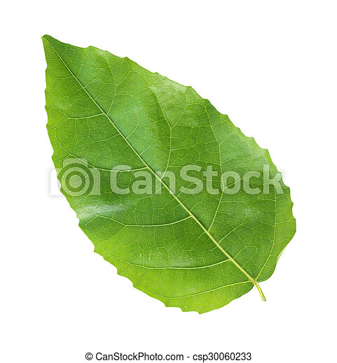 Green leaf on a white background - csp30060233