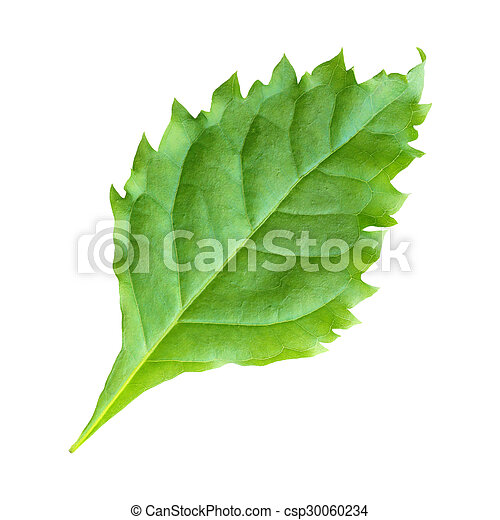 Green leaf on a white background - csp30060234