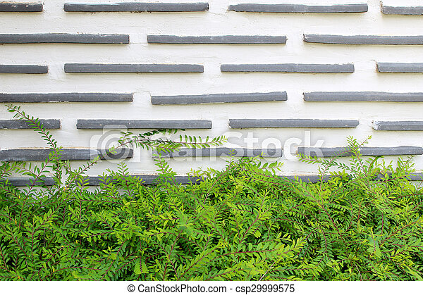 green leaf on cement wall texture background - csp29999575