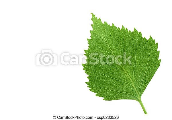 green leaf on pure w - csp0283526
