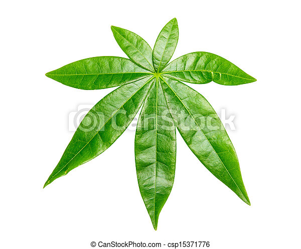 Green leaf on white background. - csp15371776