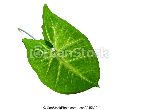 Green leaf over white - csp0245629