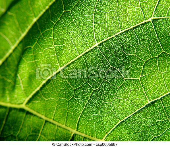 Green Leaf - csp0005687