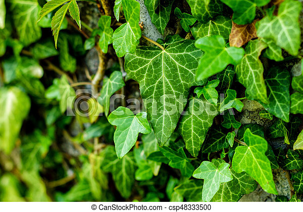 Green leaf stick at the wall - csp48333500