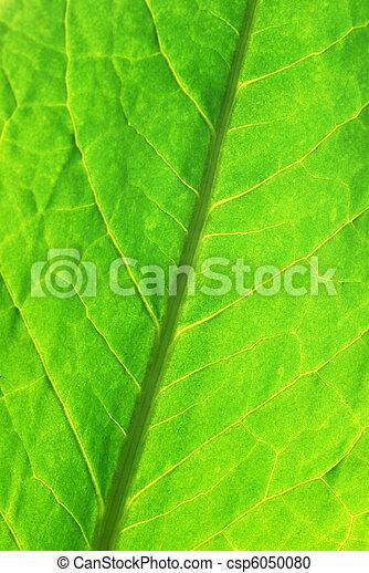Green leaf - csp6050080