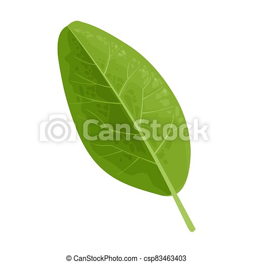 Green leaf. Vector color realistic illustration. Isolated on white - csp83463403