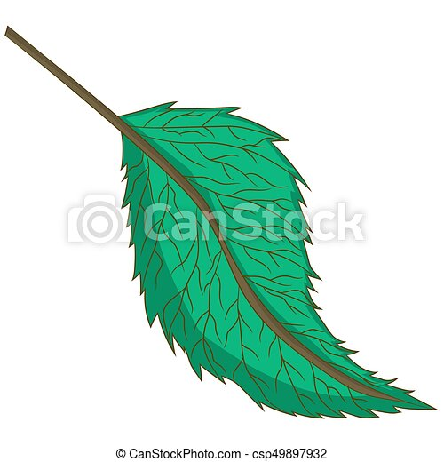green leaf. vector illustration. Drawing by hand. - csp49897932