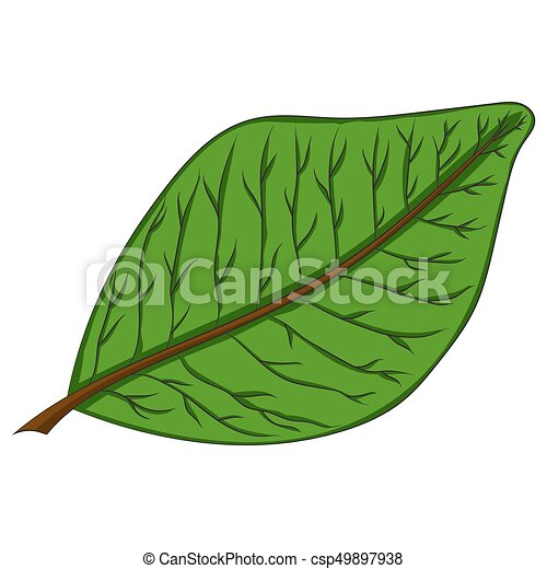 green leaf. vector illustration. Drawing by hand. - csp49897938