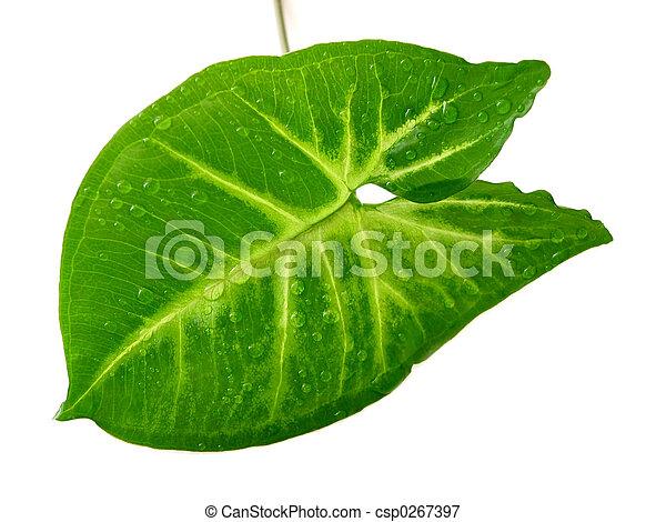 Green leaf white background - csp0267397