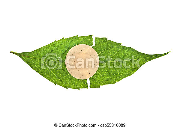 Green leaf with adhesive plaster isolated on white background - csp55310089