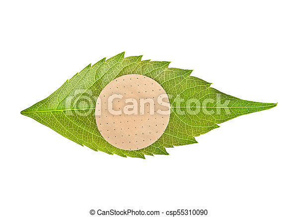 Green leaf with adhesive plaster isolated on white background - csp55310090