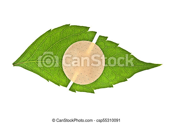 Green leaf with adhesive plaster isolated on white background - csp55310091