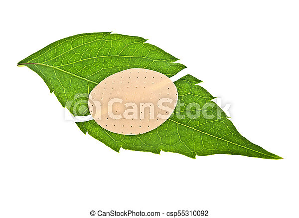 Green leaf with adhesive plaster isolated on white background - csp55310092