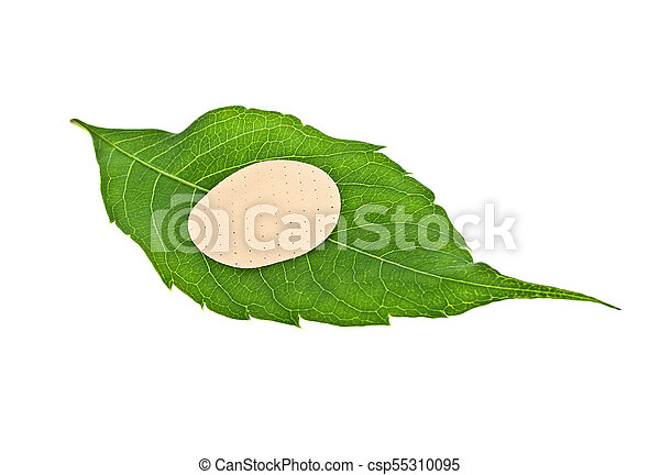Green leaf with adhesive plaster isolated on white background - csp55310095