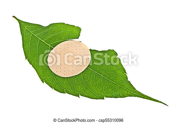 Green leaf with adhesive plaster isolated on white background - csp55310096