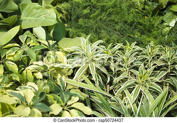 Green leafy plants - csp50724437