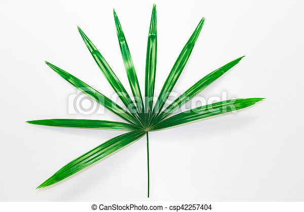 Green leave on the white background. - csp42257404