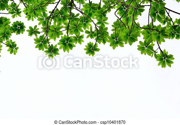 green leave on white background - csp10401870