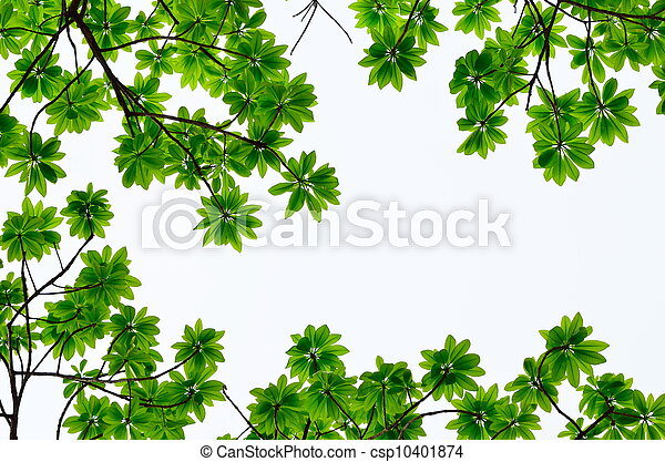 green leave on white background - csp10401874