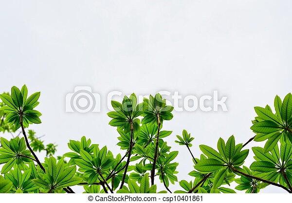 green leave on white background - csp10401861