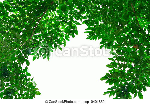 green leave on white background - csp10401852