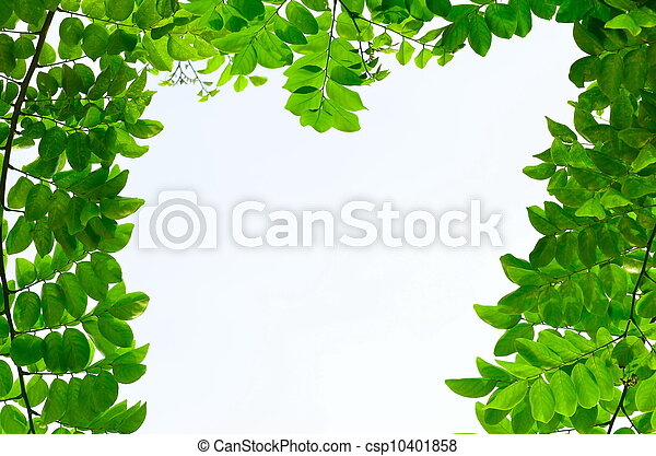 green leave on white background - csp10401858