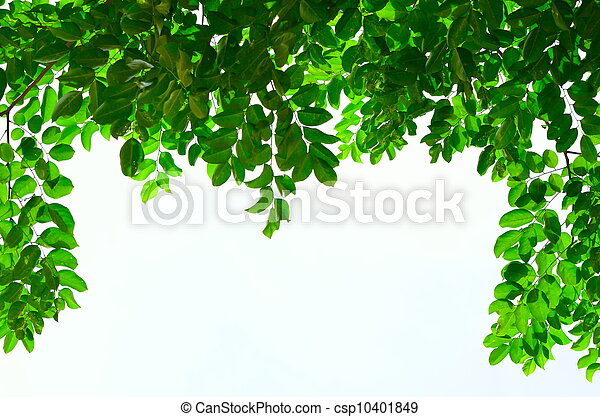 green leave on white background - csp10401849