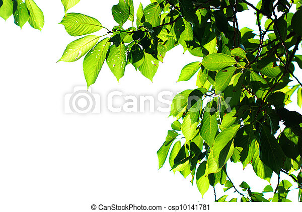 Green leave - csp10141781