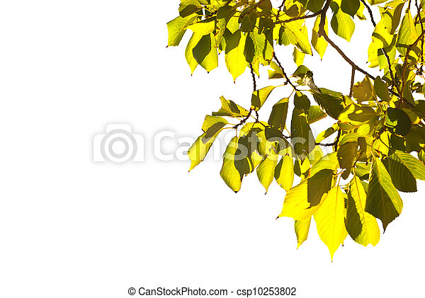 green leave - csp10253802