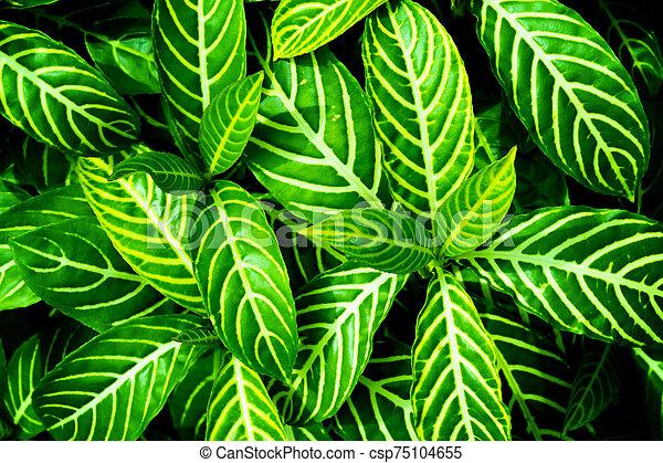 Green Leaves Background For Wallpaper Backdrop Natural Background
