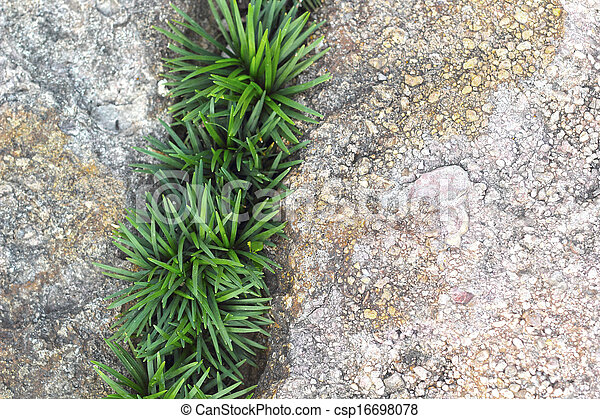 Green leaves background on stone - csp16698078