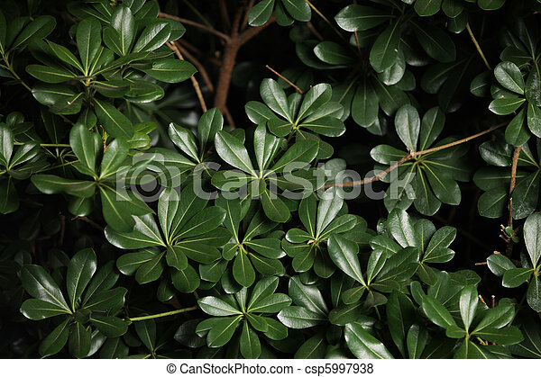 Green leaves background - csp5997938