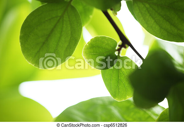 Green leaves background - csp6512826