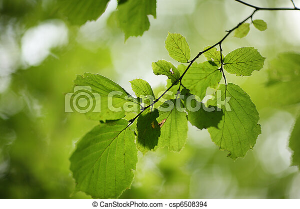 Green leaves background - csp6508394