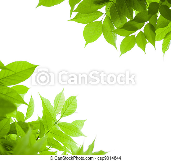 green leaves border for an angle of page over a white background - wisteria leaf - csp9014844
