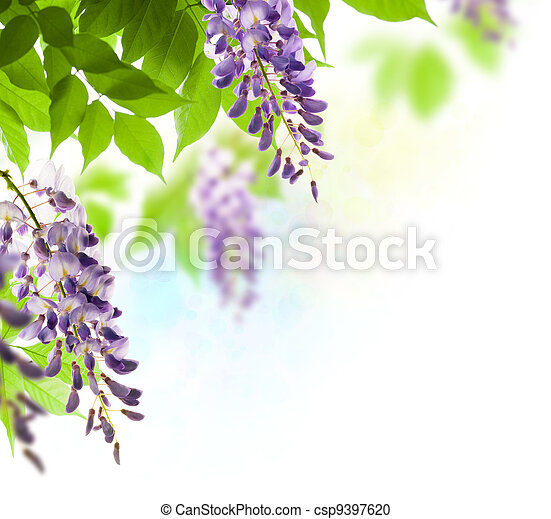 green leaves border for an angle of page over a white background - wisteria leaf - csp9397620