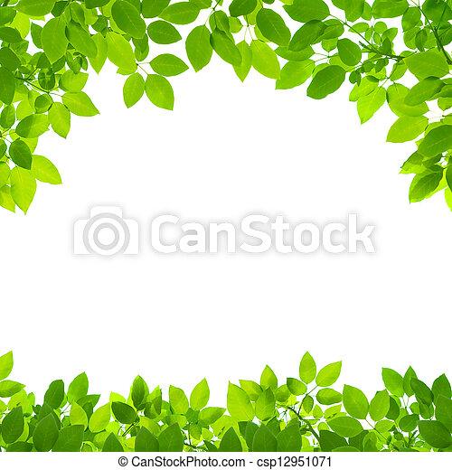 green leaves border on white background - csp12951071