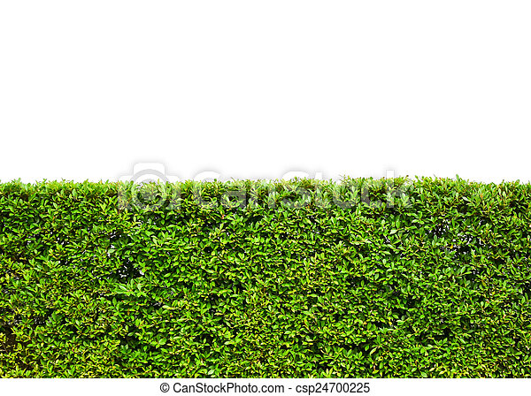 green leaves field on white background - csp24700225